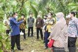 Direktorat Jenderal Pajak  Sumbar-Jambi gali potensi pajak sawit