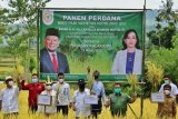 Ketua DPD RI sebut  impor beras bukan solusi di tengah panen petani daerah
