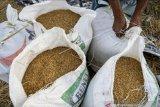 DPRD Sulteng tolak rencana pemerintah impor 1 juta ton beras