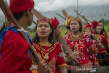 Budaya Linggona Lipu Adat Betho di Poso