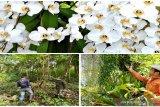 Taman Anggrek Meratus koleksi ratusan spesies anggrek alam