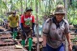 BTNS-BNF perluas area penanaman pohon di Taman Nasional Sebangau