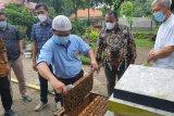 Pemkab Kampar minat budi daya lebah Australia, menggiurkan hasilnya