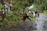 Polsek Jonggat evakuasi pohon tumbang