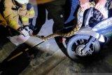 Seekor ular sanca panjang dua meter masuk ke dalam motor warga