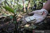 Bersih-bersih Sampah Plastik Di Hutan Mangrove