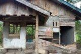 Gajah liar obrak-abrik hasil kebun dan hasil pertanian masyarakat di Nagan Raya Aceh
