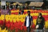Wisata taman bunga celosia di Palembang