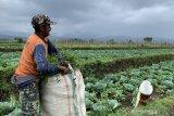 Meramu kehidupan sederhana petani menjadi daya tarik wisata edukasi