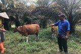 Petani Desa Batu Gajah bertani sambl patroli karhutla