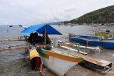 Kemenparekraf nilai wisata hiu paus di Gorontalo yang terbaik di Indonesia