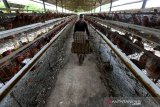 Pekerja membawa telur ayam yang telah dikumpulkan di peternakan Badan Layanan Usaha Daerah Unit Pelaksana Teknis Dinas Balai Ternak Non Ruminansia (BLUD UPTD BTNR) Dinas Peternakan Provinsi Aceh, Aceh Besar, Aceh, Rabu (31/3/2021). BLUD UPTD BTNR Aceh memiliki sekitar 50 ribu ekor lebih ayam yang mampu memproduksi sekitar 40 ribu butir telur per hari. Antara Aceh/Irwansyah Putra