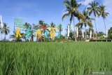 Pengunjung berjalan di hamparan sawah di Desa Wisata Kemiri, Panti, Jember, Jawa Timur, Rabu (31/3/2021). Desa Wisata Kemiri adalah desa wisata baru di Jember, yang memadukan wisata alam, pelestarian lingkungan, edukasi, dan pemberdayaan masyarakat desa. Antara Jatim/Seno/zk