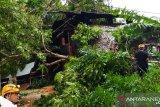 Angin kencang landa Bukittinggi, BPBD setempat terima laporan sembilan pohon tumbang dan satu rumah rusak