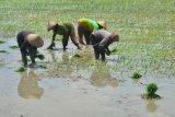 Kenaikan nilai tukar petani