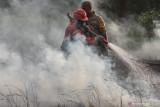 Waduh, 901 hektare lahan di Riau terbakar selama 2021