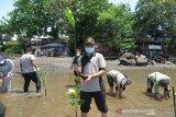 Jasa Raharja Sulut tanam mangrove di Pantai Malalayang