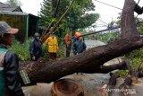 PLN Sulselrabar: 1.323 gardu distribusi terdampak cuaca ekstrem