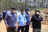 Pemerintah pastikan penataan IKN  tak ganggu konservasi hutan lindung