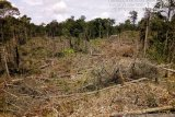 Hutan Mukomuko Bengkulu rusak seluas 334,38 Ha akibat perambahan