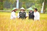 Mentan kawal panen raya dan gerakan serap gabah petani