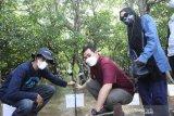 Pemkab Pangkep gandeng DKP dan Mapala Perikanan tanam 40.000 bibit mangrove
