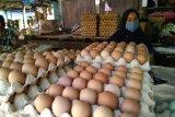 Harga telur ayam ras di Makassar bergerak turun jelang Ramadhan 1442 H