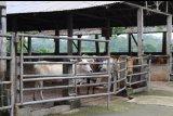 Disnakkeswan Lampung imbau feedlotter tidak naikkan harga jual jelang Ramadhan