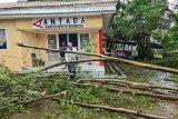 Kota Kupang nyaris lumpuh, sejumlah ruas jalan tertutup pepohonan tumbang