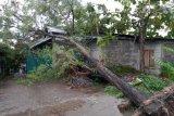 PLN berhasil pulihkan listrik padam akibat cuaca ekstrem di Yogyakarta
