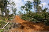 Tim KLHK cek kerusakan hutan produksi Air Rami  Mukomuko akibat perambahan