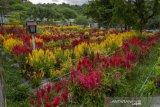 Wisata taman bunga di Sigi