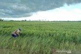 Bupati Seruyan minta penyuluh pertanian lebih aktif dampingi petani