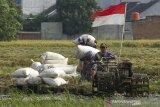 Petani membawa karung berisi hasil panen padi di areal persawahan Desa Margasari, Karawang, Jawa Barat, Rabu (7/4/2021). Kementerian Pertanian terus berupaya untuk menstabilkan harga gabah dengan menyerap gabah petani sesuai Harga Pembelian Pemerintah (HPP) guna menjamin stok beras nasional serta meningkatkan kesejahteraan petani. ANTARA JABAR/M Ibnu Chazar/agr
