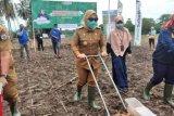 Pemkab Mamuju kukuhkan 10 kelompok tani jagung  Kecamatan Papalang