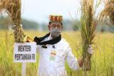 5.120 hektare lahan kawasan food estate di Aceh Besar