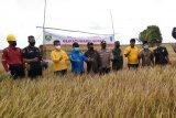 PT BAP gali kanal bantu pengairan sawah petani OKI