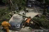Petugas Dpkp3 Kota Bandung mengevakuasi pohon tumbang yang menimpa mobil di Bandung, Jawa Barat, Kamis (8/4/2021). Sedikitnya lima mobil mengalami rusak akibat tertimpa pohon yang diduga tumbang akibat cuaca angin kencang yang terjadi di Kota Bandung. ANTARA JABAR/Novrian Arbi/agr