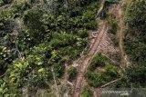 Foto udara kawasan tebangan kayu bundar jati di Resort Pemangkuan Hutan (RPH) Gadung, Banjar Utara, Jawa Barat, Kamis (8/4/2021). Perum Perhutani Kesatuan Pemangkuan Hutan (KPH) Ciamis telah melaksanakan Pengelolaan bidang produksi kayu bersertifikat standar internasional Forest Stewardship Council (FSC) pada tahun 2021 sebanyak 25.995 meter kubik dengan luas tebang habis kayu mencapai 322,93 hektare dan tebang pemeliharaan seluas 444,42 hektare dari total 767.35 hektare di wilayah KPH Ciamis. ANTARA JABAR/Adeng Bustomi/agr