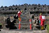 Perawatan Candi Borobudur menggunakan minyak serai wangi