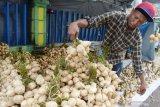 Penjual menata bengkuang di Magetan, Jawa Timur, Kamis (8/4/2021). Penjual yang mengaku berasal dari Kediri tersebut mendatangkan bengkuang dari Tuban Jawa Timur dan dijual dengan harga antara Rp10.000 hingga Rp15.000 per ikat tergantung besar kecilnya bengkuang. Antara Jatim/Siswowidodo/zk