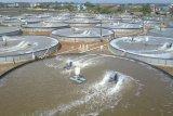 KKP: Tambak milenial Jepara berhasil panen parsial perdana udang 4 ton