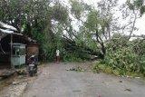 Bencana alam menyebabkan penurunan kualitas layanan Telkomsel di NTT