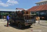 TRANSAKSI TERNAK  JELANG TRADISI MEUGANG RAMADHAN DI PASAR HEWAN. Mobil barang mengangkut ternak sapi tiba di pasar hewan tradisional, Desa Cot Irie, Kecamatan Krueng Baruna Jaya, Kabupaten Aceh Besar, Aceh, Sabtu (10/4/2021). Menjelang tradisi meugang (hari memotong ternak) menyambut bulan Ramadhan 1422 H di daerah itu, harga penawaran sapi lokal dan sapi peranakan kisaran Rp 14 juta hingga Rp 40 juta per ekor menurut besarannya  atau naik sekitar 15 persen dari harga sebelumnya. ANTARA FOTO/Ampelsa.