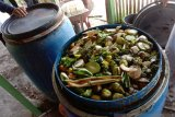 Komunitas milenial Agam olah limbah jadi pupuk organik cair