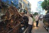 Pohon tumbang timpa satu unit mobil di Kebayoran Lama