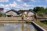 DPKP Kabupaten Gumas paparkan analisa laba budi daya ikan