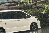 Pohon tumbang menimpa mobil Eros Djarot