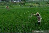 Tambahan alokasi pupuk bersubsidi angin segar bagi petani
