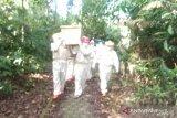 Pasien COVID-19 di Bangka meninggal bertambah menjadi 35 orang